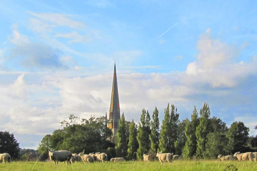 Sheep may safely graze – Sept 2017